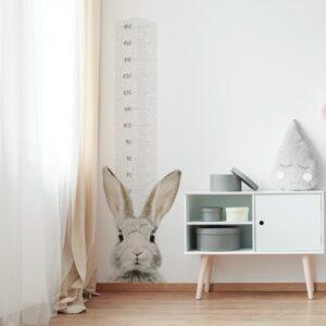 miarka wzrostu z królikiem