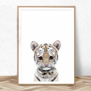 Plakat na ścianę Small Tiger