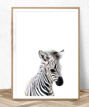 Plakat na ścianę Small Zebra