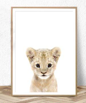 Plakat na ścianę Small Lion