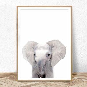 Plakat na ścianę Small Elephant